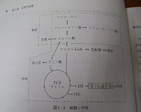 TCA回路