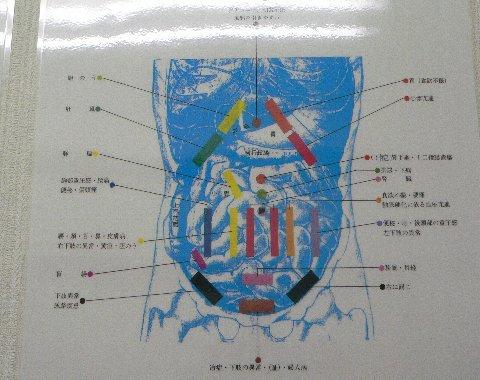 腹部の反射点