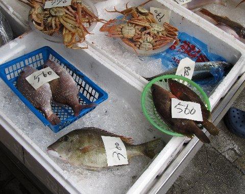魚いろいろ