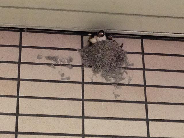 ツバメの巣逆瀬川駅130629