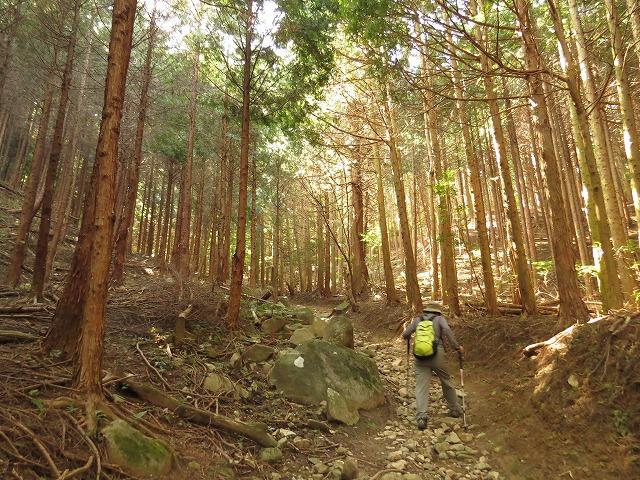 IMG_1514●人工林