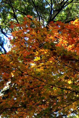 寿福寺~陰と、紅葉。
