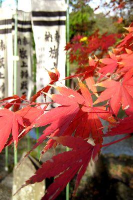 鶴岡八幡宮~祝言と、紅葉と、銀杏と。