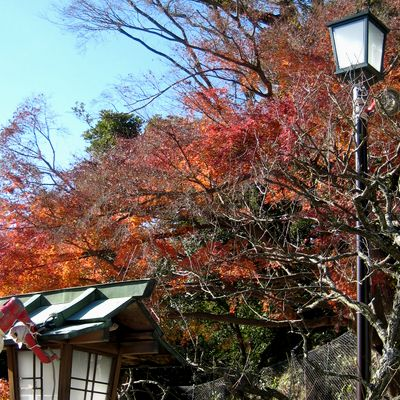 鎌倉宮~紅葉と、厄払い。