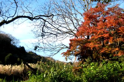 永福寺跡~すすきと空と、紅葉と。