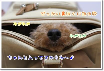 3_20091108004235.jpg