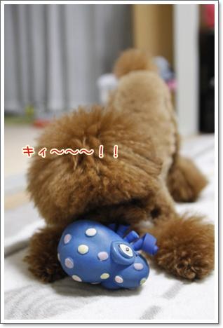 a_20091127000108.jpg