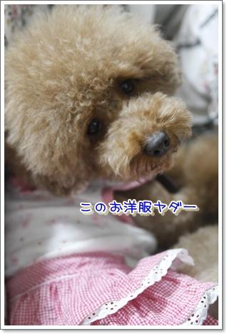 a_20100113221945.jpg