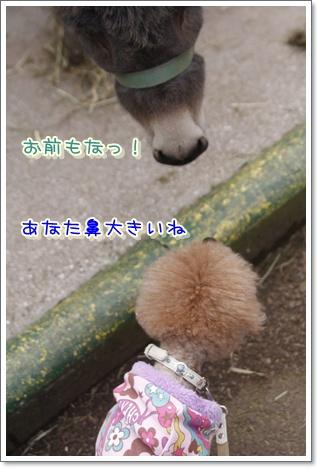 b_20100105184702.jpg