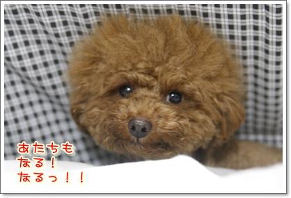 b_20100110002345.jpg