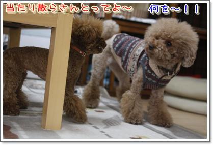 b_20100119005540.jpg