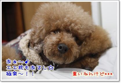b_20100119210231.jpg