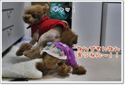c_20091204005151.jpg