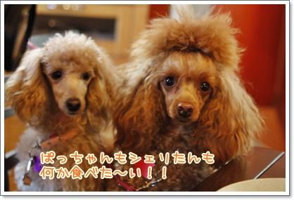 d_20091123220310.jpg