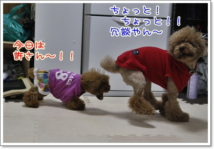 d_20091204005151.jpg