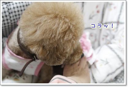 d_20100113221945.jpg