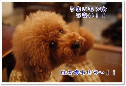 e_20091130000637.jpg