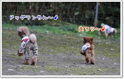 f_20091123220308.jpg