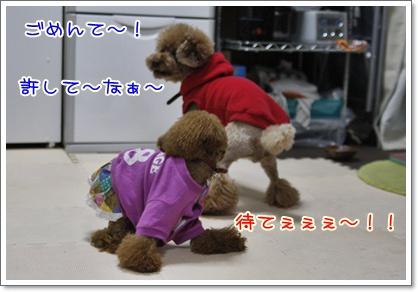 f_20091204005151.jpg