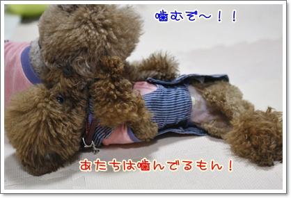 f_20091206231125.jpg