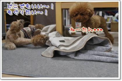 f_20100119005539.jpg