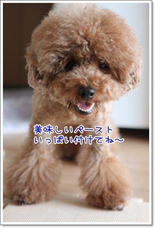 g_20091110190339.jpg