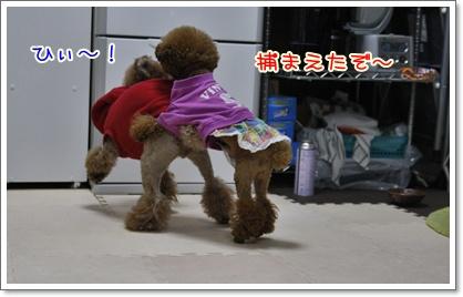 g_20091204005915.jpg