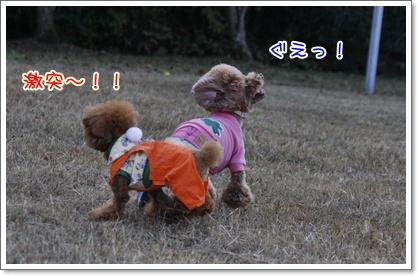 n_20091108224510.jpg