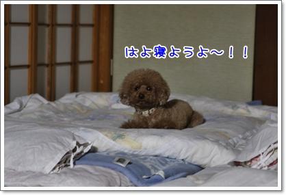 n_20091123224034.jpg