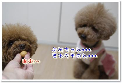n_20100110235612.jpg