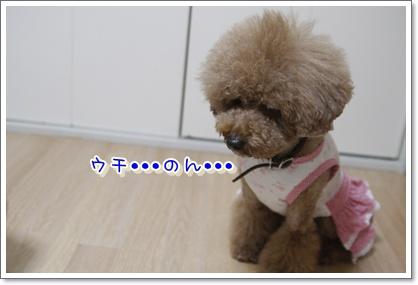 p_20100110235612.jpg