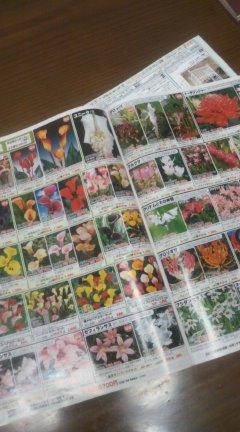 花のカタログ