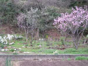 早春の庭2
