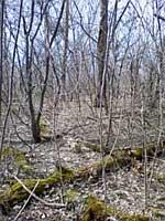 島見の森2