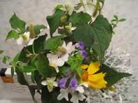 見舞いの花