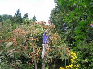 木登りパパ