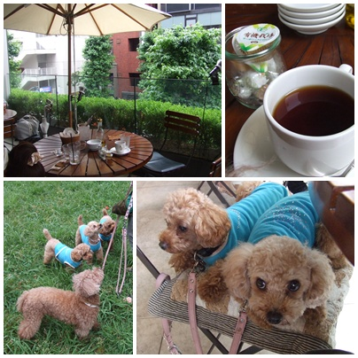 Royal Garden Cafe(ロイヤルガーデンカフェ) 渋谷店