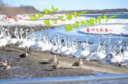 DSC_0137コピー③
