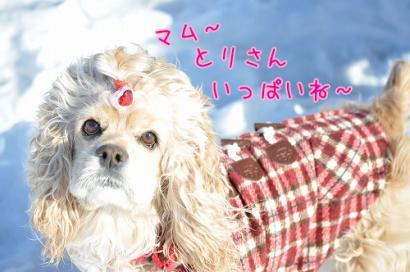DSC_0130コピー②