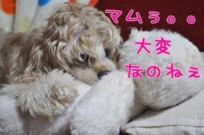 DSC_0697コピー