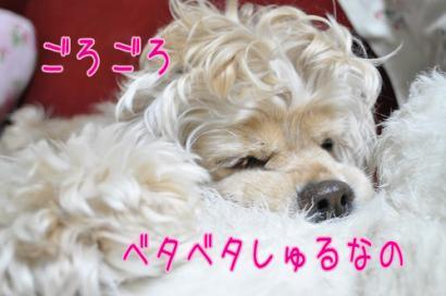 DSC_0800コピー