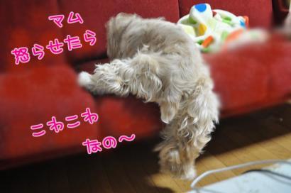 DSC_1223コピー②