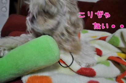 DSC_0716コピー②
