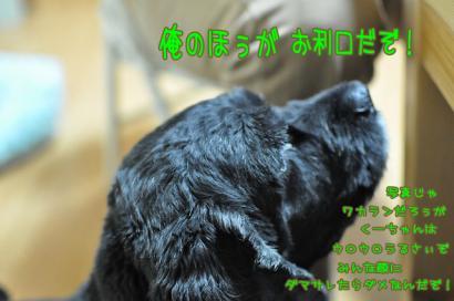 DSC_5304コピー②