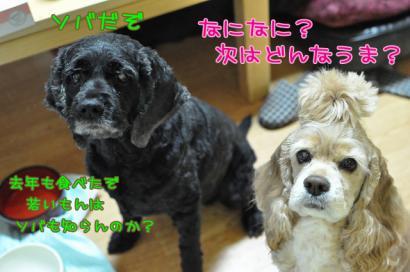 DSC_5325コピー