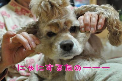 DSC_5360コピー①