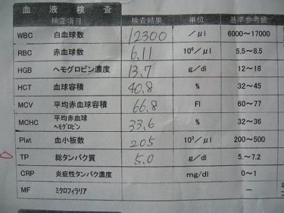 P1050180.jpg