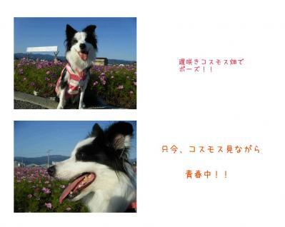 弥生公園2