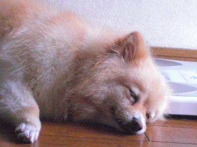 カプコ寝る3