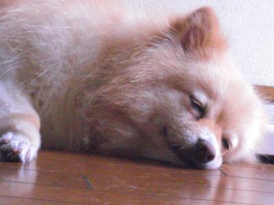 カプコ寝る